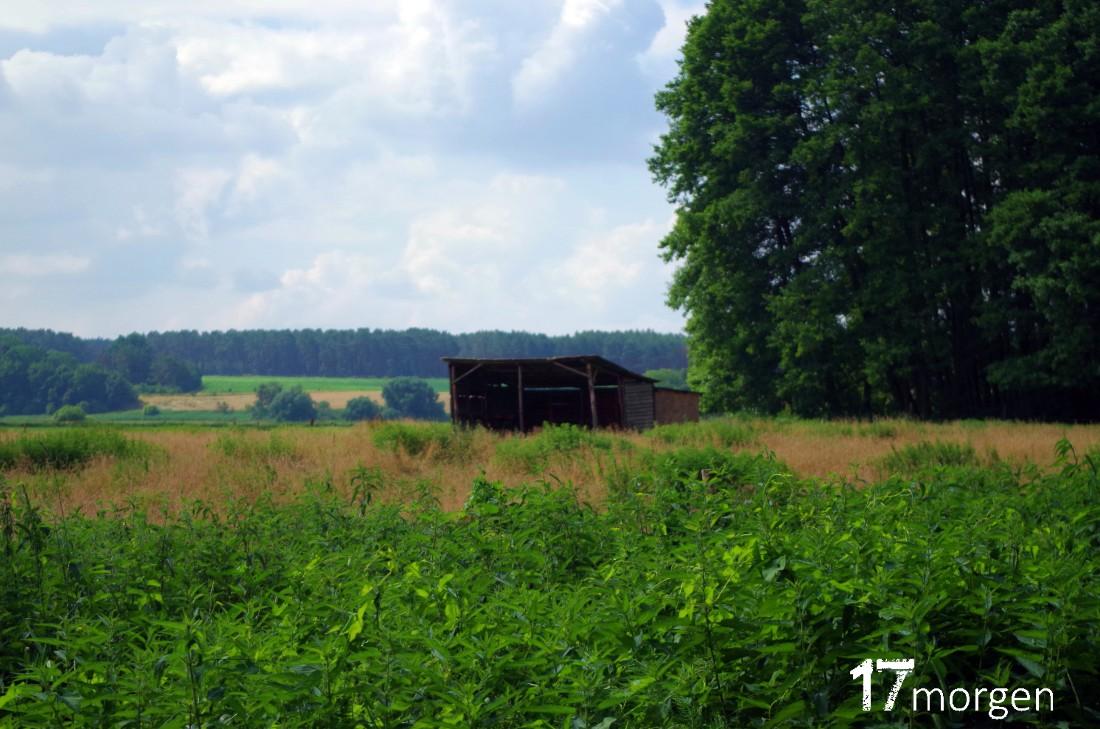 1-Weinwanderung-Brandenburg-17morgen-009